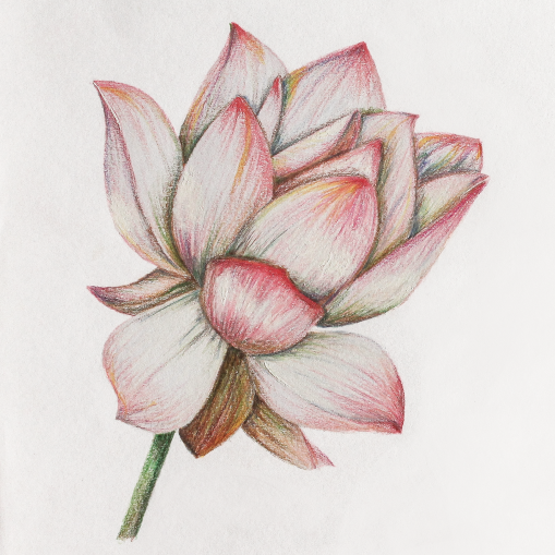 Lotus_Artwork_07
